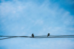Two little birds on electric cable line on sky background, Birds silhouette