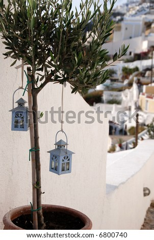 Two little blue bird houses in an olive tree
