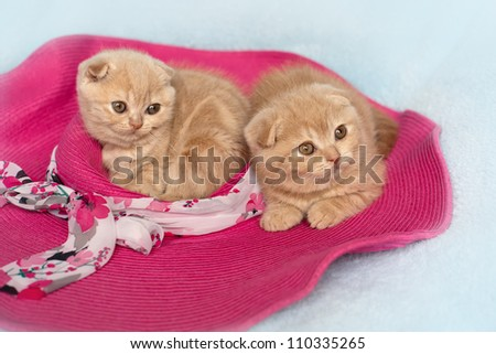 Two little cat lying on the pink hat