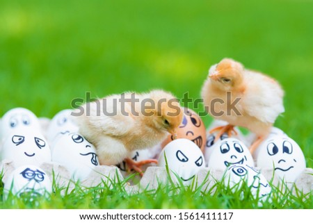 Two Little cute baby chicks playing together on Many eggs and many emotions were placed on green grass in beautiful sunlight. Copy space and Selective focus  #1561411117