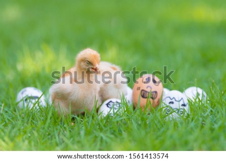 Two Little cute baby chicks playing together on Many eggs and many emotions were placed on green grass in beautiful sunlight. Copy space and Selective focus  #1561413574
