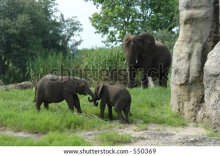 Two little elephants playing while big elephant watching