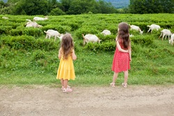 Two little girls sisters are watching goats in the pasture. Children having fun, jumping, laughing at the farm. Active Family Lifestyle Weekend. Local getaway with kids