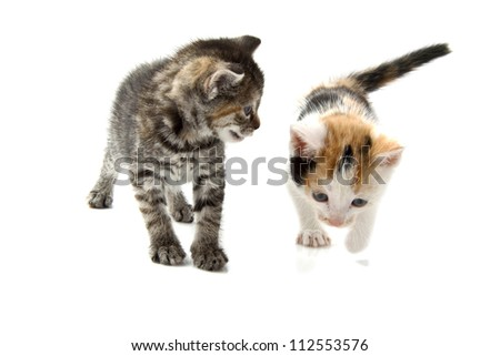 Two little kittens isolated on a white background