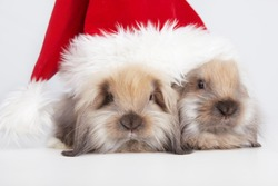 Two little rabbit in a Christmas cap