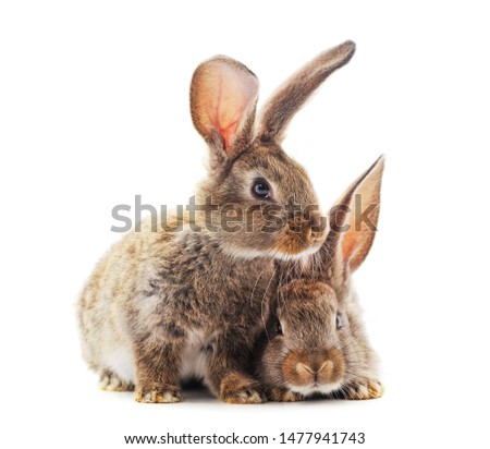 Two little rabbits isolated on a white background. #1477941743