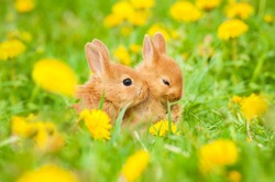 Two little rabbits sitting in flowers outdoors