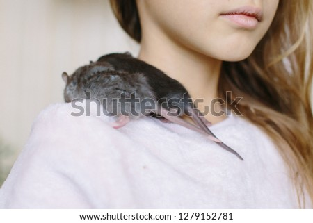 Two little rats sit on the shoulder of a child Foto stock ©