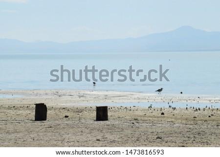 Two log trunks and a seagull on sandy coastal shoreline beach.