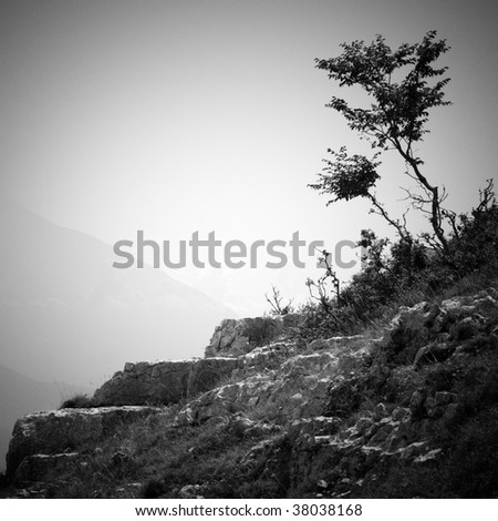 two lone trees on a rock against a mountain landscape in black and white