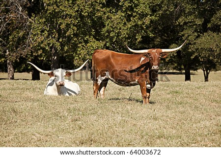 Two longhorn cows in a field with trees and grass.