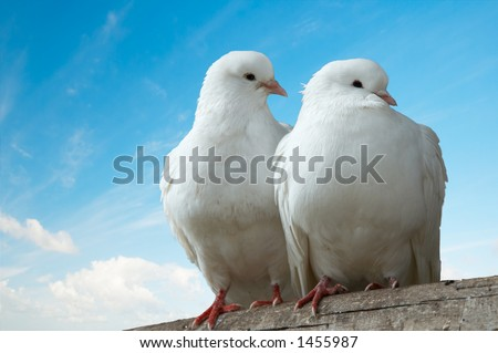 Two love birds against blue sky