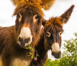 Two lovely young donkeys live on the pasture near Marburg.