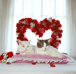Two loving white cats lay on a pink pillow in front of a big red heart made of flowers for valentines day.