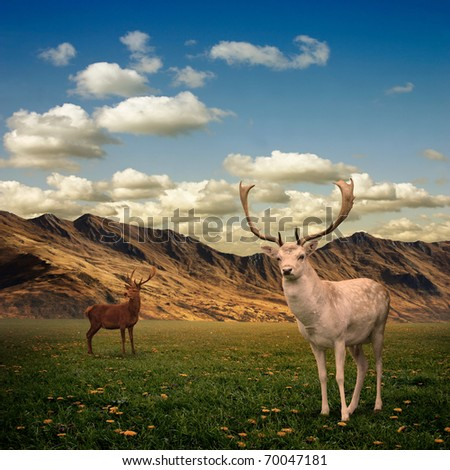 Two Male Stag Deer on a Meadow