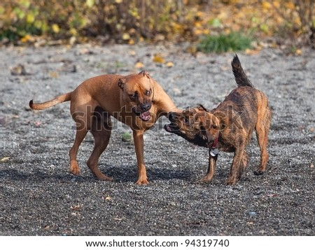 Two males dogs playing at a park