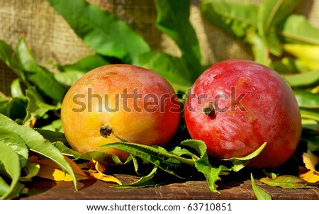 Two mangoes fruits.