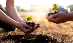 Two men are planting trees and watering them to help increase oxygen in the air and reduce global warming, Save world save life and Plant a tree concept.