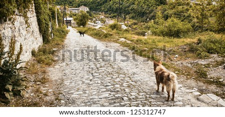two mongrel dogs stay on old road