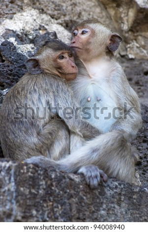Two monkeys in each other's arms - stock photo