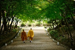 Two monks walking on a road with a green tree tunnel. Back view, shady garden in a temple in Kyoto Japan