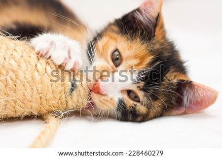 do cats still mate after being fixed