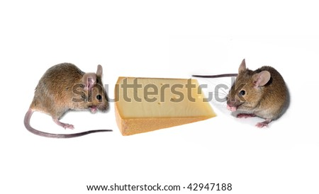 two mouses and cheese