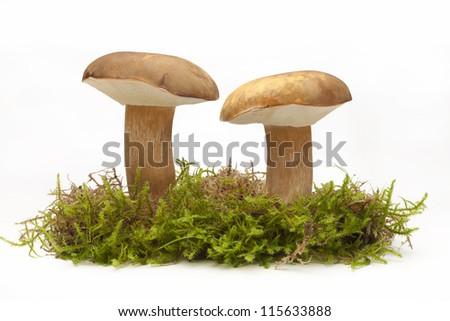 two mushrooms on moss (hongo, seta, boletus Edulis)