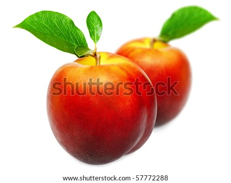 two nectarines with green leaves over white background
