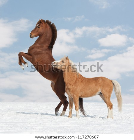 Two nice horses in the winter