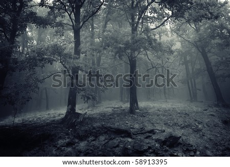 two oak trees in a beautiful forest with mist rising from ground at night