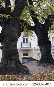 Stock photo of two old gnarled linden trees at autumn, facade of light yellow building on background. Focus on house.