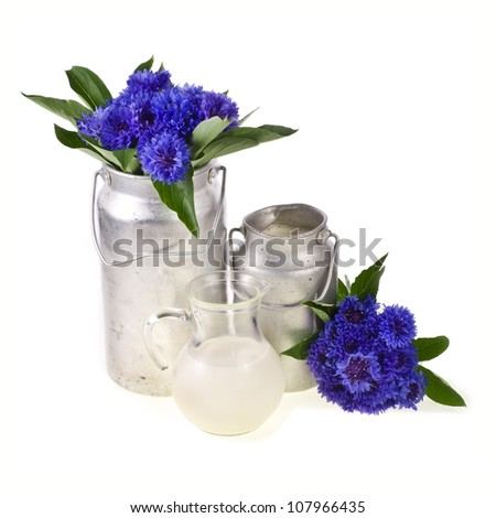 two old milk cans with fresh milk and a glass jug with milk, flowers, cornflowers, isolated on white background
