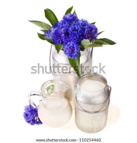 two old milk cans with fresh milk and a glass with milk, just spilled milk and flowers cornflowers, isolated on white background