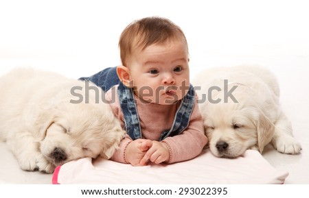 Stock Photo Two One month old puppie of golden retriever with little four sweet  month girl