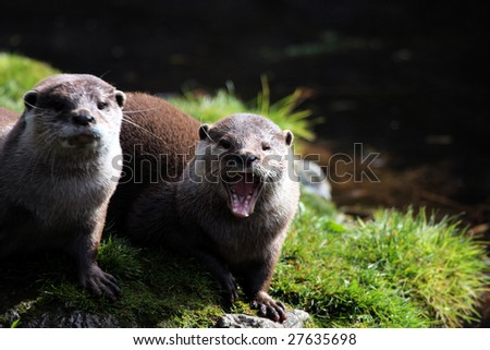 Two Otters on a river bank