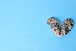 two oyster shells lie in the shape of a heart on a blue background.