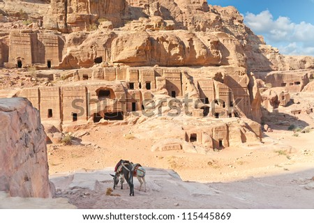 Two pack mules in Ancient Petra city Jordan