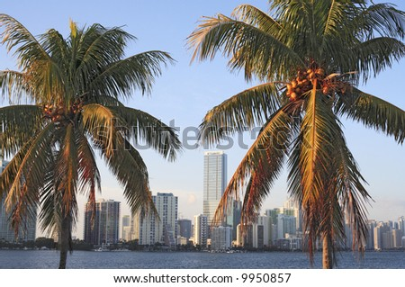 Two palm trees against the Miami skyline during late afternoon. #9950857