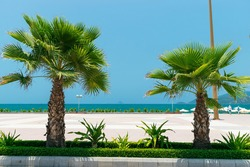 Two palm trees and green grass and square on beach and blue sea