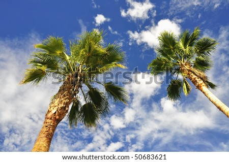 two palms against pretty blue sky useful as a background