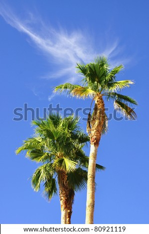 two palms against pretty blue sky with interesting cloud formation useful as a background