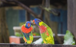 Two parrots discussing a topic