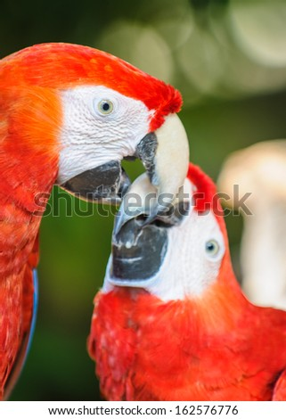 Two parrots in South America