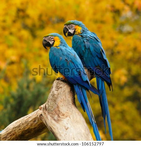 two parrots sitting on a bole