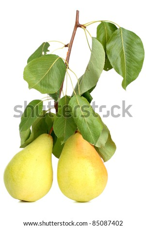 Two pears on a branch with leaves isolated on white background