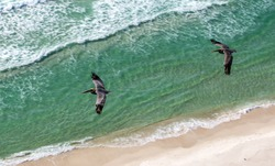 Two pelican birds in flight over the green waters of Gulf of Mexico, in the Florida Panhandle.