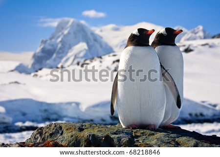 Two penguins dreaming sitting on a rock, mountains in the background