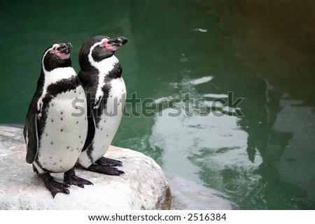Two penguins on a rock with their eyes closed - stock photo