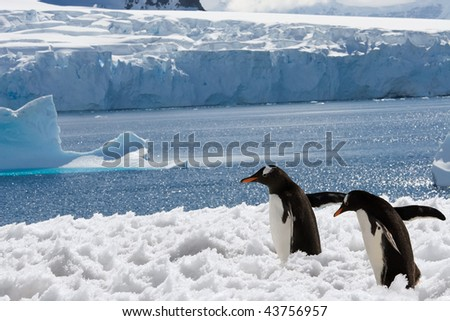 two penguins on their way in Antarctica - stock photo